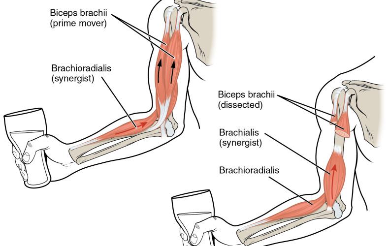 Naberanie svalov a strata tuku