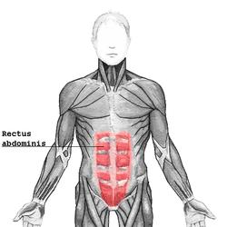 Brušný sval_abdominis